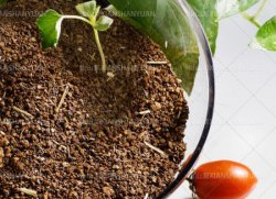 De Maaltijd van het Zaad van de thee op het Gebied van de Padie, het Gebied van de Aquicultuur, Meststof wordt gebruikt die