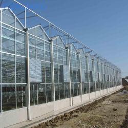 Venta caliente de efecto invernadero de cristal comercial sombra la casa verde de las plantas o flores y verdura