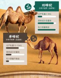 Высшего качества на заводе OEM дешево для оптовых цен на 100% натуральным свежие верблюжьим молоком до 1 кг