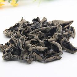 Schwarzer essbarer Baum-fungöse kleine getrocknete hölzerne Ohr-Pilze