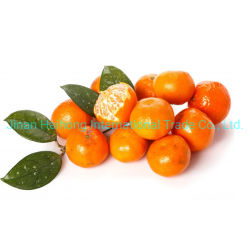 中国のMarketのためのSweet and SourのSamll Orange