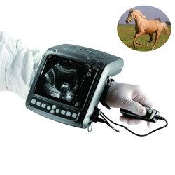 Thérapie par ultrasons portable Instruments de médecine vétérinaire de la machine pour les bovins Equine