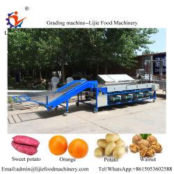 Máquina de classificação do azeite chinês automática