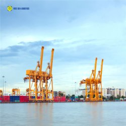 La aduana de importación y exportación de mar aire Freight Forwarder China a Japón