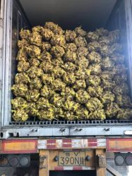 2020 nueva cosecha de jengibre fresco conjunto de los precios de la exportación a ultramar