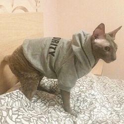 Gato Gato como mascota de la seguridad Ropa abrigos sudaderas con capucha chaqueta de traje para gatos Pet cálidas prendas de vestir animales Conejo Traje de mascota para perros