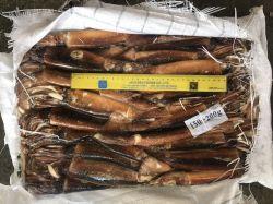 Calamaro dell'Argentina del rifornimento/calamaro congelato/calamaro congelato di Illex
