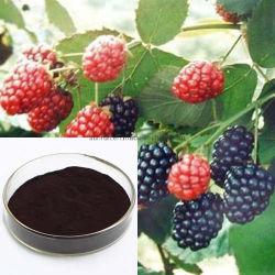 Suministro de la fábrica de fruta de la morera en polvo con un 20% Anthocyanidins