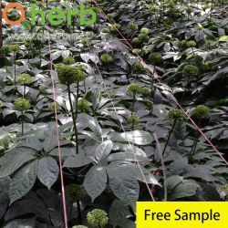 12% Ginsenoside Rb3 Notoginsengの葉のトリテルペン