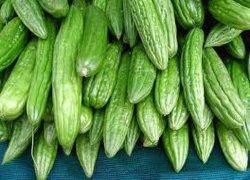 Uittreksel van de Meloen van 100% het Natuurlijke Bittere met 98% Matrine