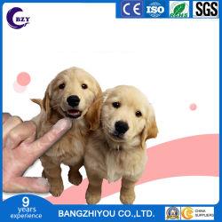 Fontes de Pet Dog Escova de dentes do dedo luvas de cuidados de grooming Pet