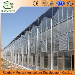 2021 البيع الساخن فينلو التجارية لفائف الصلب الإطار الزجاج متعدد المدى الدفيئة مع نظام النمو Hydroponic Tomato