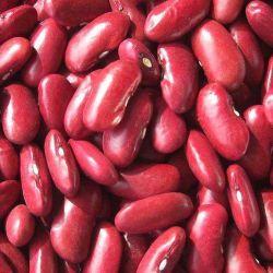 2020nueva cosecha alubias rojas oscuras