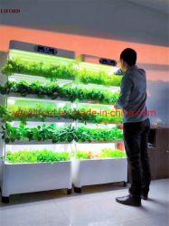 L'éponge de semis en serre hydroponique Soilless intérieure de la culture des plantes