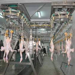 6000bph屠殺場のための自動家禽のアヒルの屠殺のプロセス用機器への1000bph