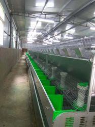 Hutch di coniglio d'alimentazione Breeding automatico della gabbia del coniglio