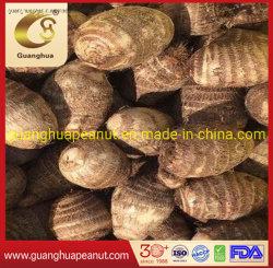 Neue Ernte Top-Qualität Shandong frischen Taro (60-80g)