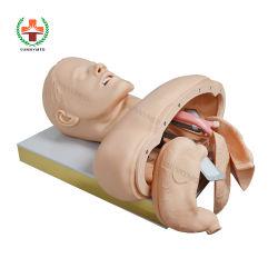 Sy-N04402 Medizinisches Lehrmodell Trachea Intubation Training Manikin