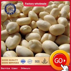 Los Granos de maní de cultivo de maní y almendras con piel roja/ Kernel maní crudo