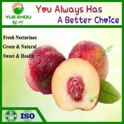 Hot Sale nouvelle récolte de l'arachide avec des prix bon marché à partir de Shandong
