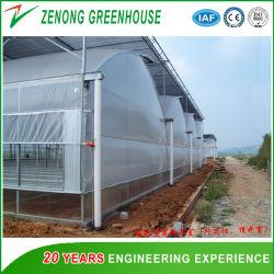 Multi-Span Plástico invernadero con sistema de hidroponía para Rose/Tomate Cherry/Chilli / Turismo