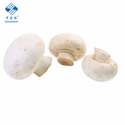 최고급 품질의 맛있는 화이트 냉동 버섯 샹피뇽 나메코 에둘리 볼리투스