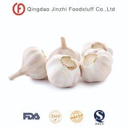 Китай нормального/ослепительно белый свежего чеснока
