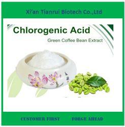 Puder grüner der Kaffeebohne-Auszug-Chlorogensäure-10-70%