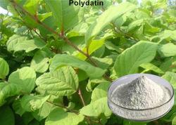 Blanc Poudre Polydatin Polygonum cuspidatum extraire