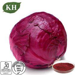 Extrait de chou-rave/Violet Kale extraire/extrait de chou rouge en poudre