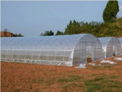 Hot Sale serre agricole Tunnel de jardin en polycarbonate serre le film en plastique