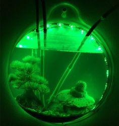 فالأسماك الخلاق الجذابة المذهلة التي يتم تثبيتها على الحائط!