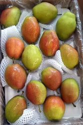 Ya Pear Crown Pear Singo Pear Shandong Pear
