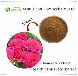 Fabrik-Zubehör Flos Rosae chinensis Auszug Puder-China-Rose