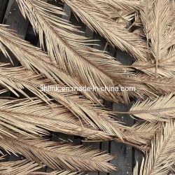 Natürliche getrocknete Palm Leaf Fans, getrocknete Blatt-Handventilatoren, Ventilatoren glättend, dekorative Wände und Wedding Bogen-Palm Leaf Ventilatoren getrocknetes Blatt