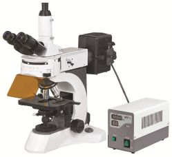 Bestscope BS-7000A Upright Fluorescent Biological Microscope High Resolution Fluorescent Objectives