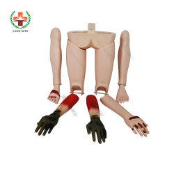 Sy-N04304 의학 가르치는 장비 외상 사지 모형