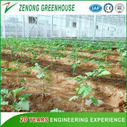 Serra all'ingrosso dello strato del policarbonato della fabbrica usata come Camera del giardino per gli ortaggi/fiori