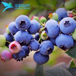 Las frutas en polvo Extracto de arándanos frescos