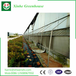 L'isolation/couche unique/verre durci/intelligent pour fleur ou de légumes de serre/fruits ou de la plantation d'/Ferme/aquaculture/l'élevage/Restaurant écologique