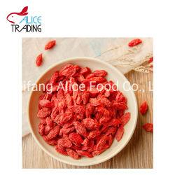 Séchées Goji Berry séchées naturelles Wolf Berry avec la nouvelle récolte de Ningxia en Chine