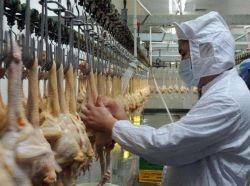 Цыпленок убоя птицы дома с помощью оборудования линии животноводстве содержится в процессе птицы