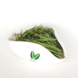 Il bambù asciutto cinese dello Zhu YE Qing lascia il tè verde, tè puro del fiore dei germogli della lavanda