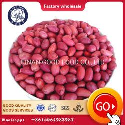 大きさの組織的に育てられた自然な未加工殻から取り出された赤い皮ピーナツ