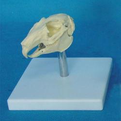 Biología de alta calidad la enseñanza de conejo modelo esqueleto cráneo (R190122)