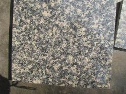 Exportados da China Leopard em granito da pele, preço competitivo Tamanho personalizado Azulejos Sotnes polida para bancada/Vaidade Top/Escada