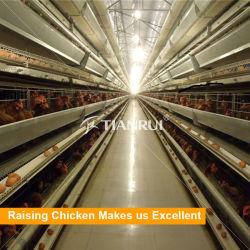 Un type de poulet automatique pour les poules pondeuses en cage