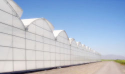 Pc Sheet Agriculture Plastic Film Glass Sheet Multi-Span Polycarbonaat Greenhouse