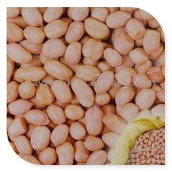 L'arachide Java 50/60 di origine Ragiastan dei noccioli dell'arachide a partire da Nik-Maggio esporta Llp