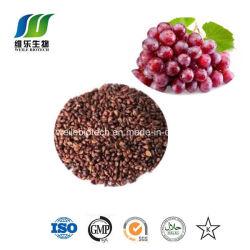 Proanthocyanidine oligomérique de 95 %, extrait de pépins de raisin en poudre (GSE)